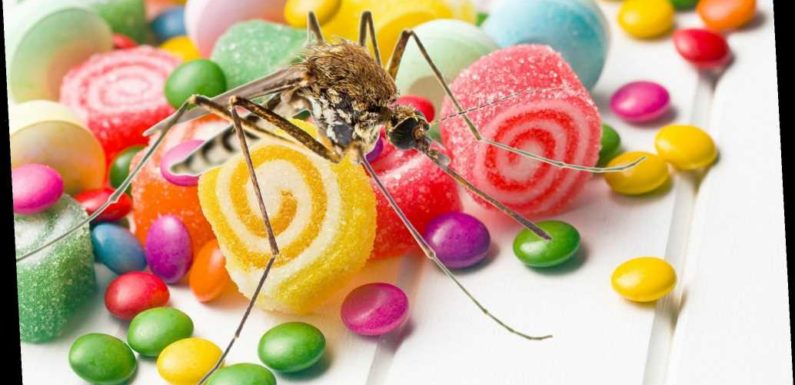 """Study: Human blood tastes like """"salty and sweet candy"""" to mosquitoes"""